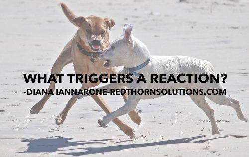 triggers-a-reaction